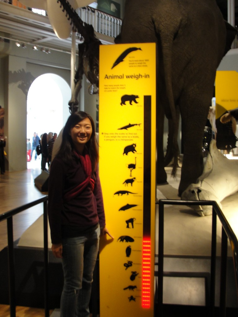 girl standing on scale showing weights of various animals weighing in close to giant aneater