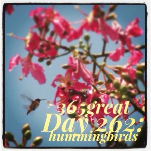 365great challenge day 262: hummingbirds