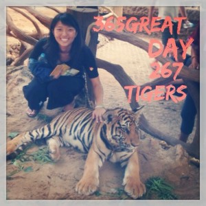 365great challenge day 267: tigers