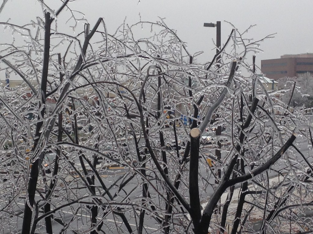 trees branches covered in layer of ice from winter storm