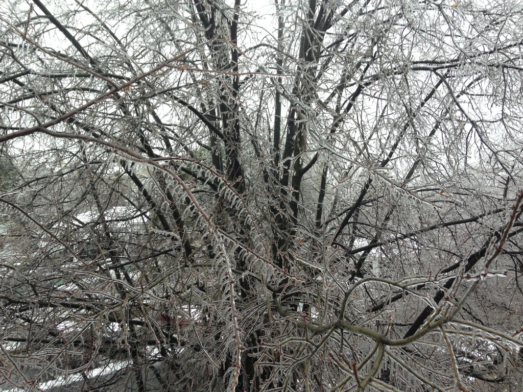 tree branches completely encased in layer of ice