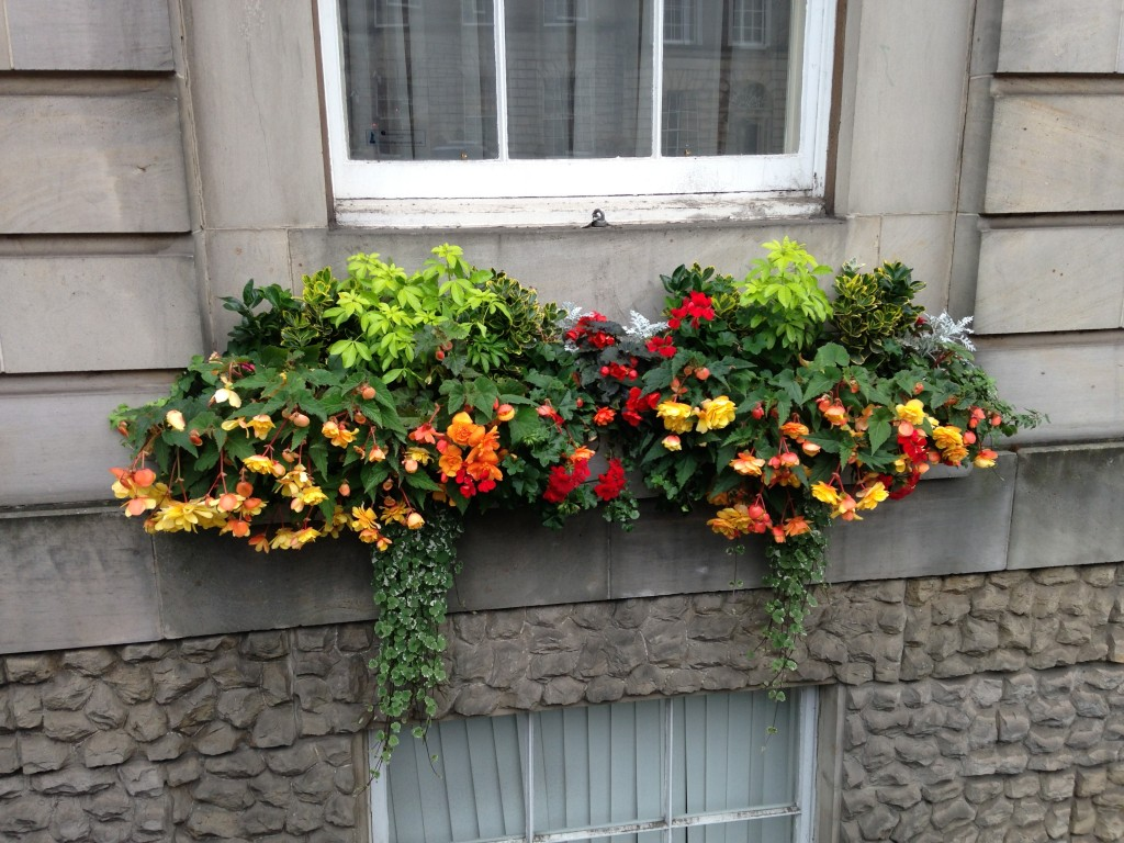 windowsill in edinburgh with bright flowers growing against dull walls