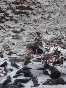 hawk sitting on rocks in snowy icy terrain behind iced over branches