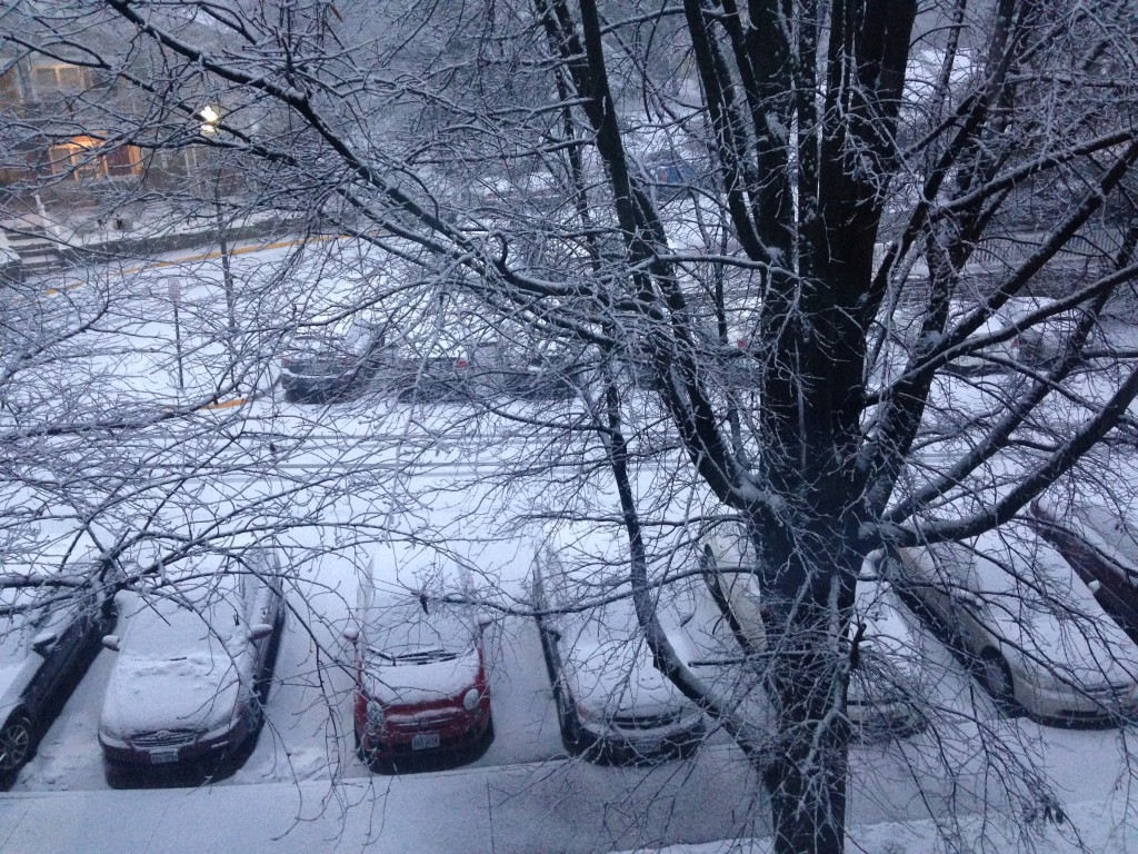 layer of snow covering all ground, cars, and trees