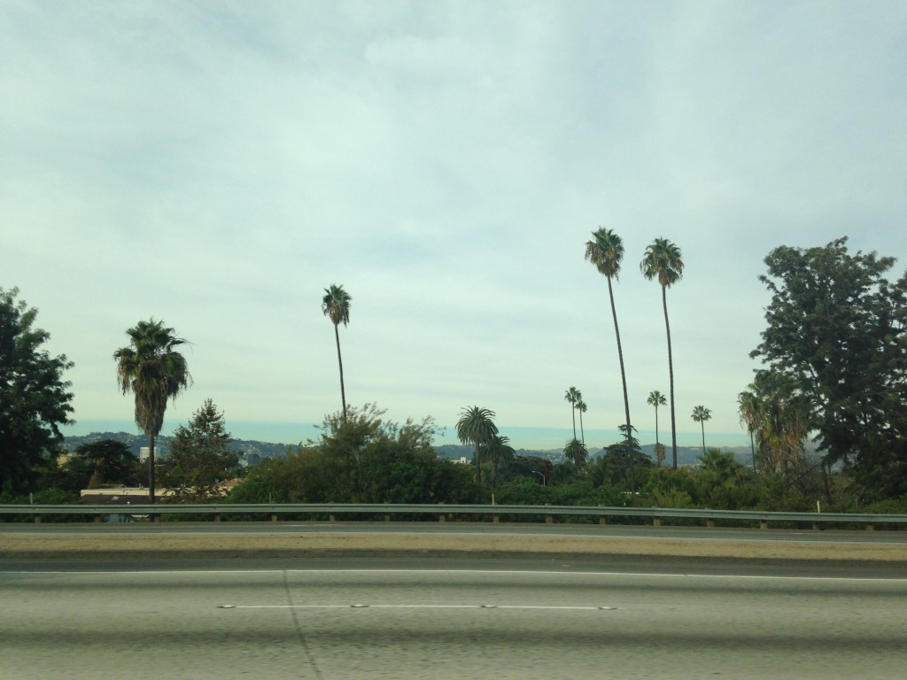view from los angeles freeway of palm trees and clouds into distance