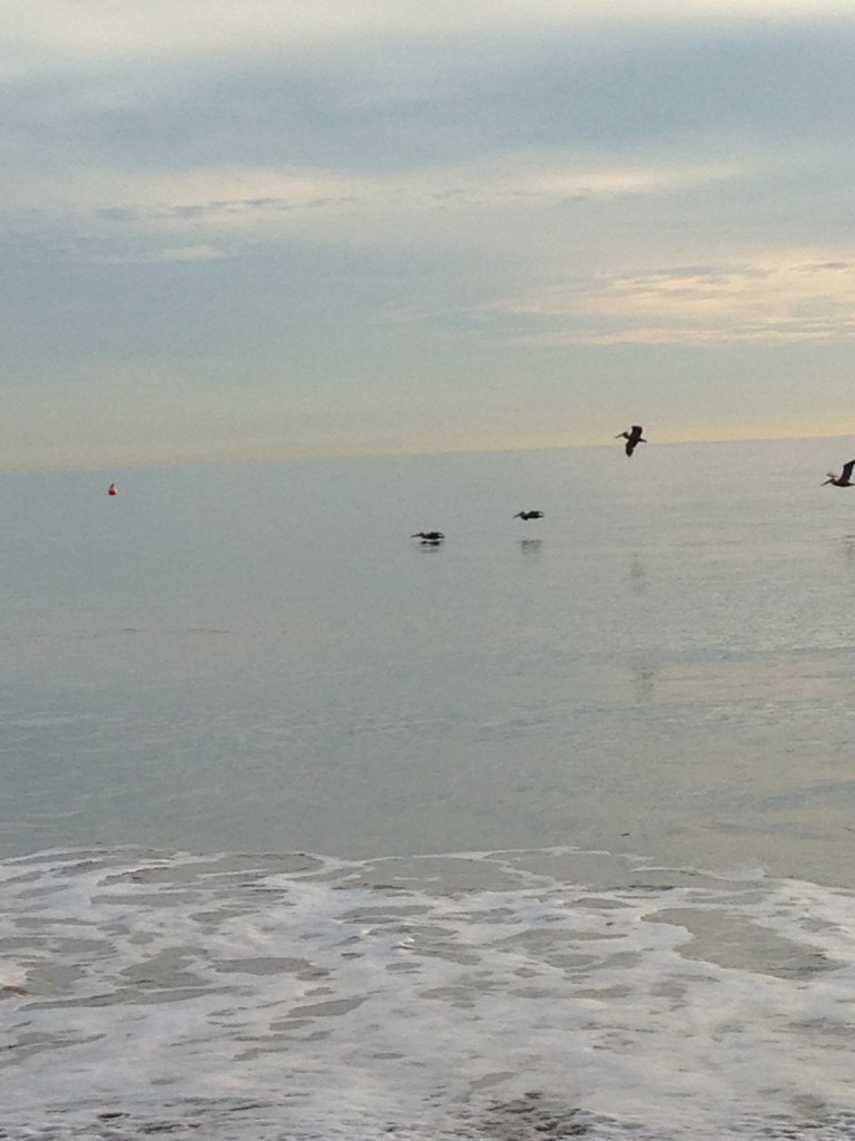 pelicans flying low over ocean by beach
