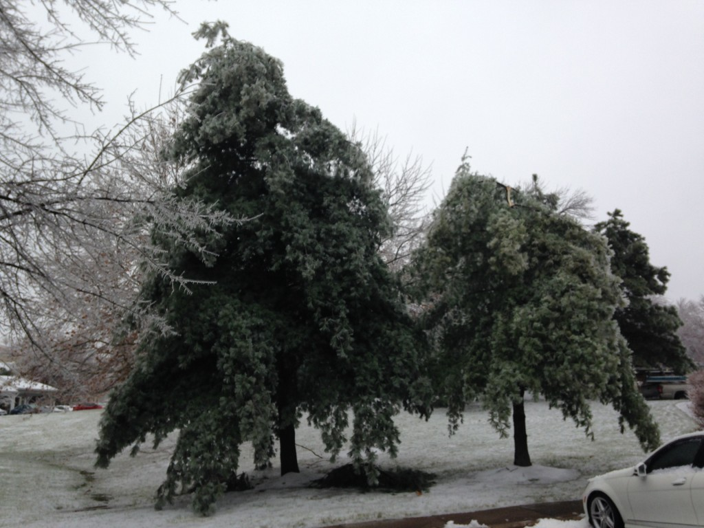 iced over pine trees with tops missing from breaking off due to the weight of the ice