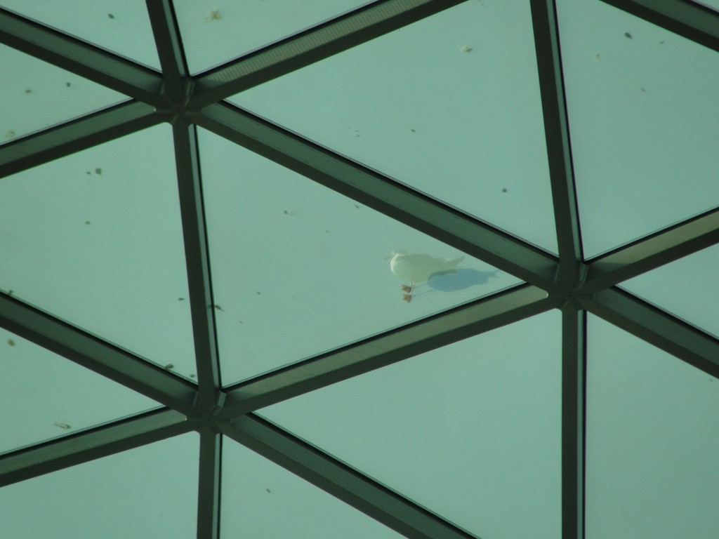 seagull standing atop dome seen through from inside british museum