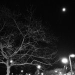 bare tree branches with moon shining bright in night sky