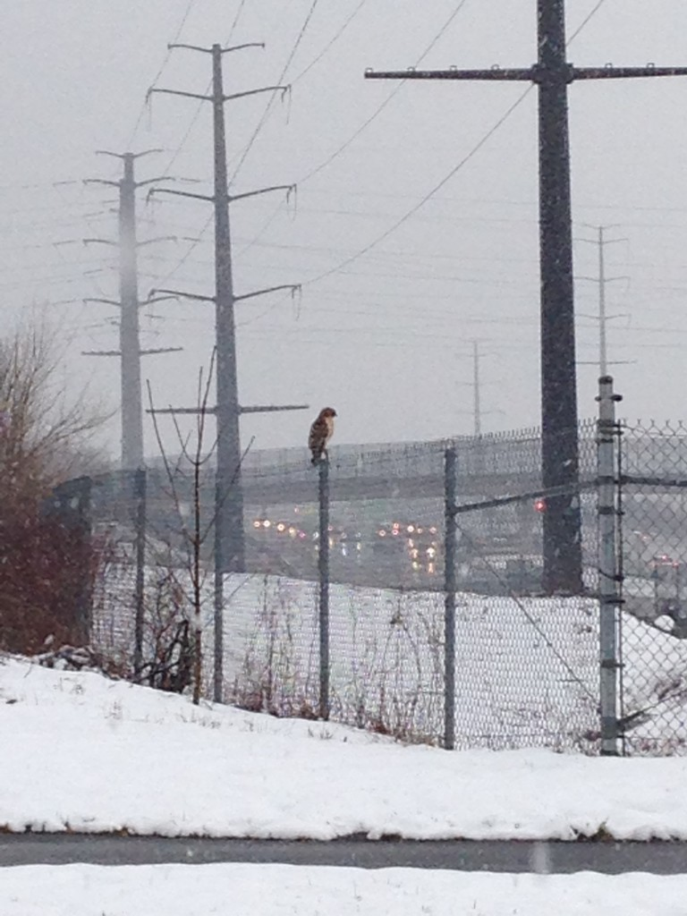 brown owl sitting on fence in snowy landscape