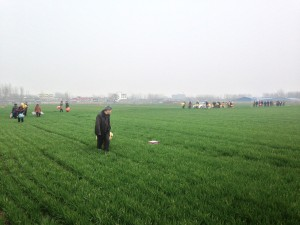 long trail of people making way through crop fields to visit grave site