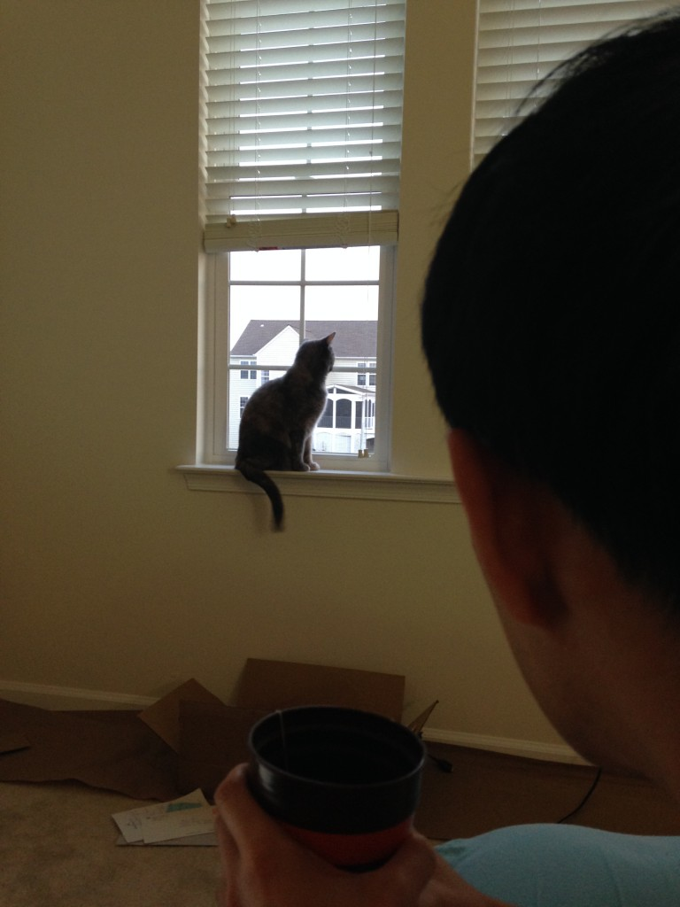 person watching cat looking out window