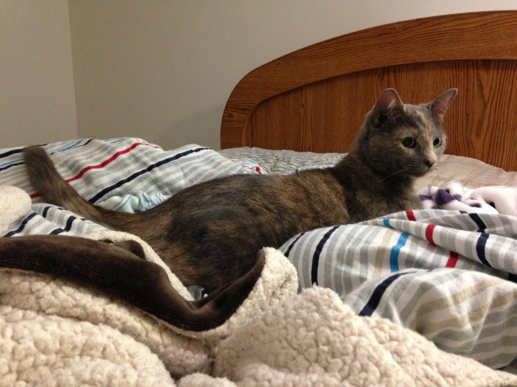 She briefly sat on the bed before deciding she liked it better underneath.