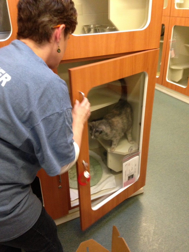 Smokey, you're going to your new home!