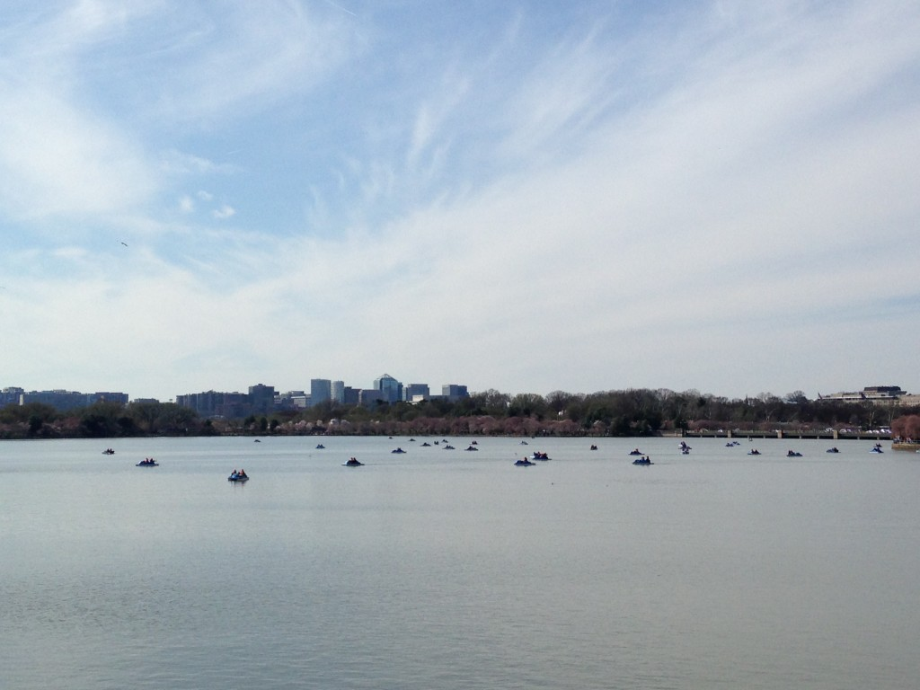 dozens of people on paddle boats in tidal basin