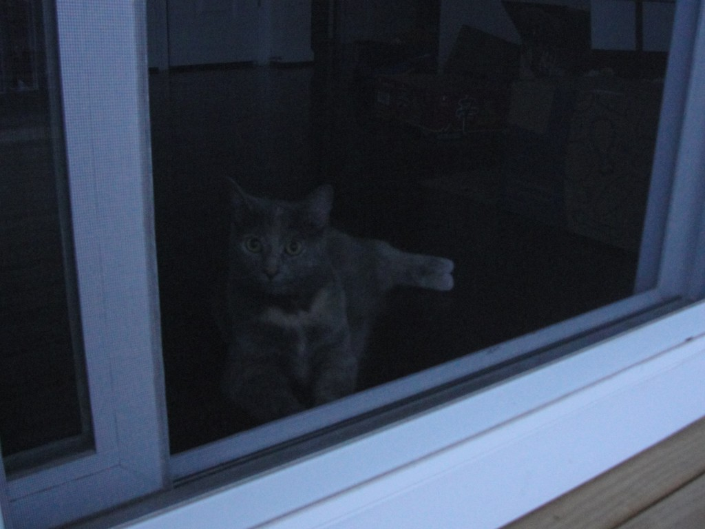 cat laying in kitchen behind screen door