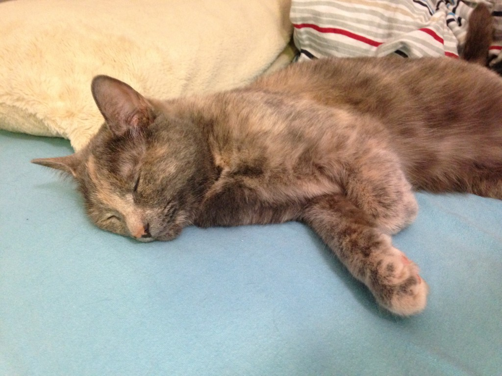 cat laying on side of bed in deep sleep