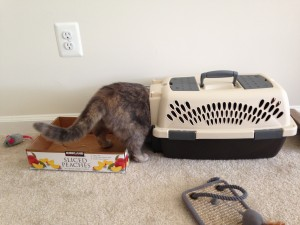 cat sticking head into small cat carrier