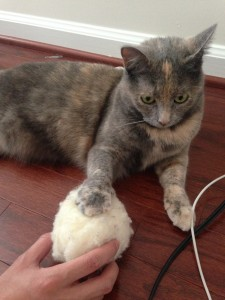 cat sitting with paw on wool ball