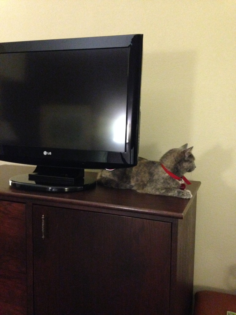 Upon arriving at the hotel, she decided this was the optimal perch.