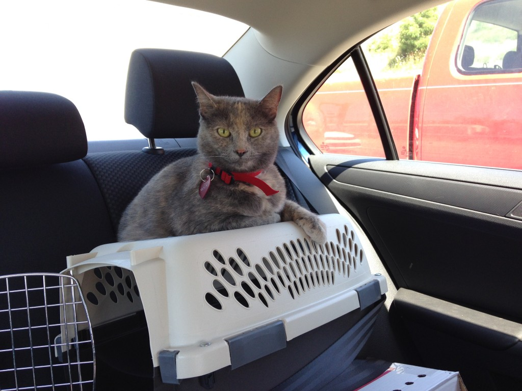 She loved perching on top of the carrier.