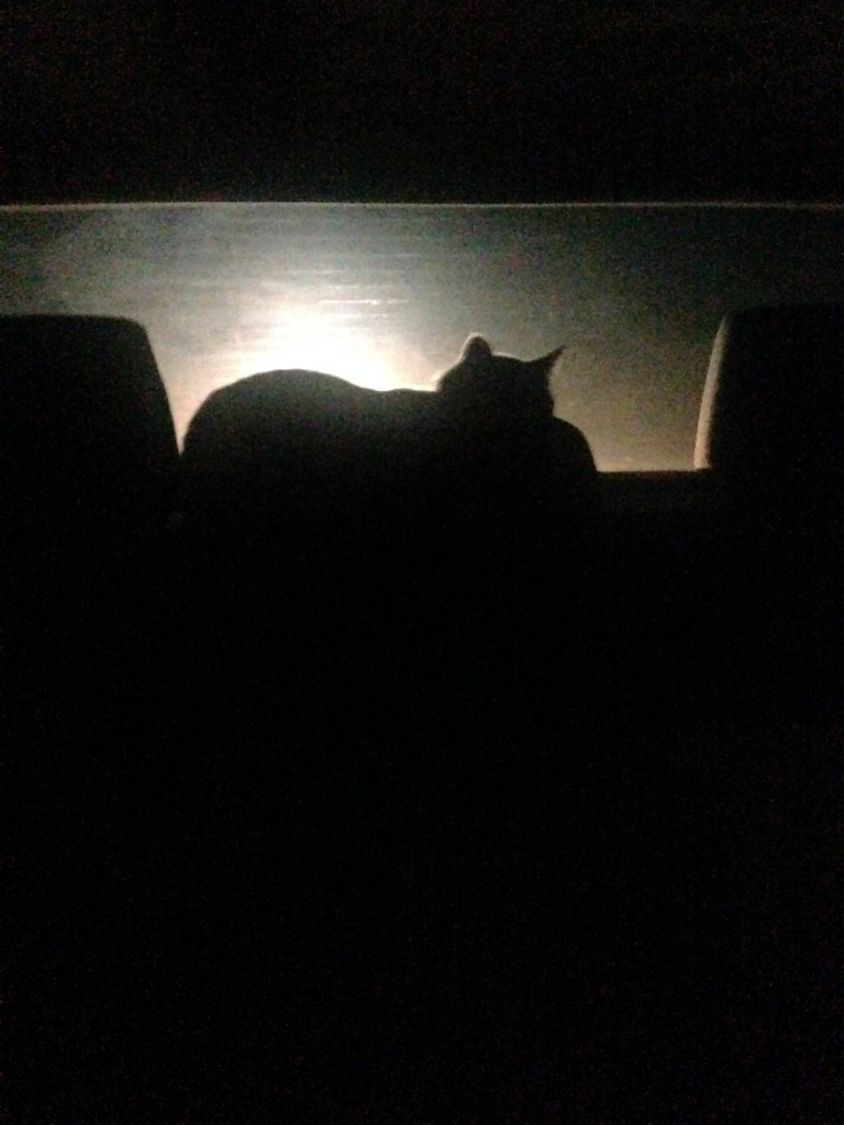 On our night drive out of town, she found a few favs including this spot.