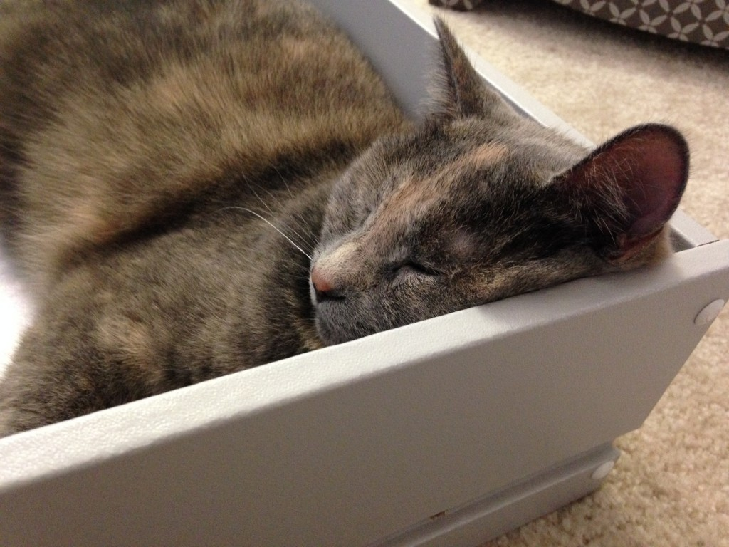 cat sleeping in corner of drawer with face squished