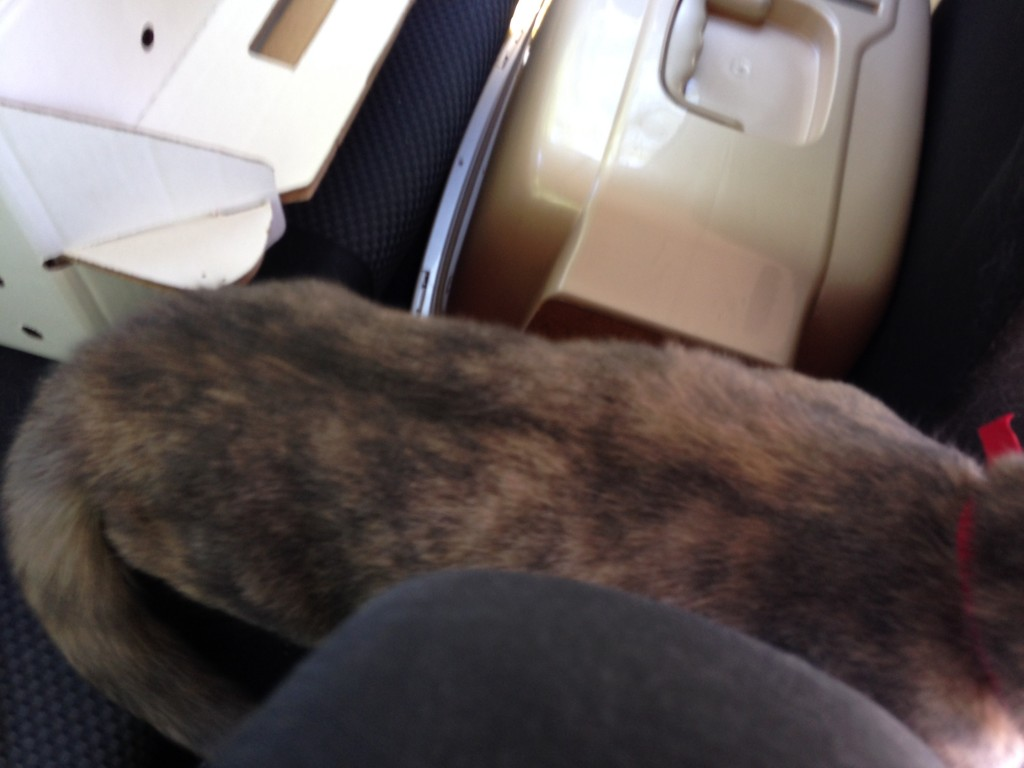 She really loved having her paws on the center console and her feet on the back seat... leaving her belly to hang.