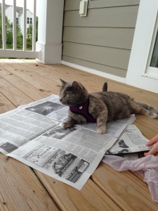 cat laying on newspaper on porch