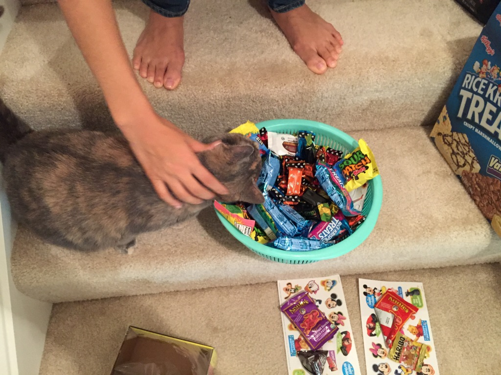 cat chewing on bag of candy in basket of halloween candy