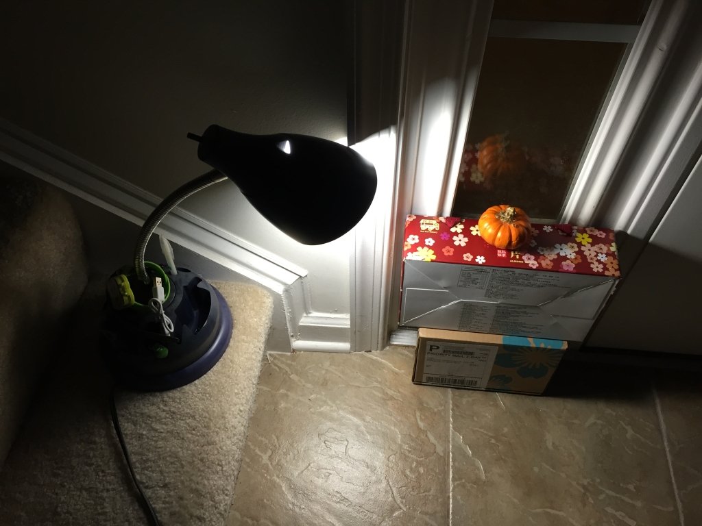 light shining on mini pumpkin inside window by door