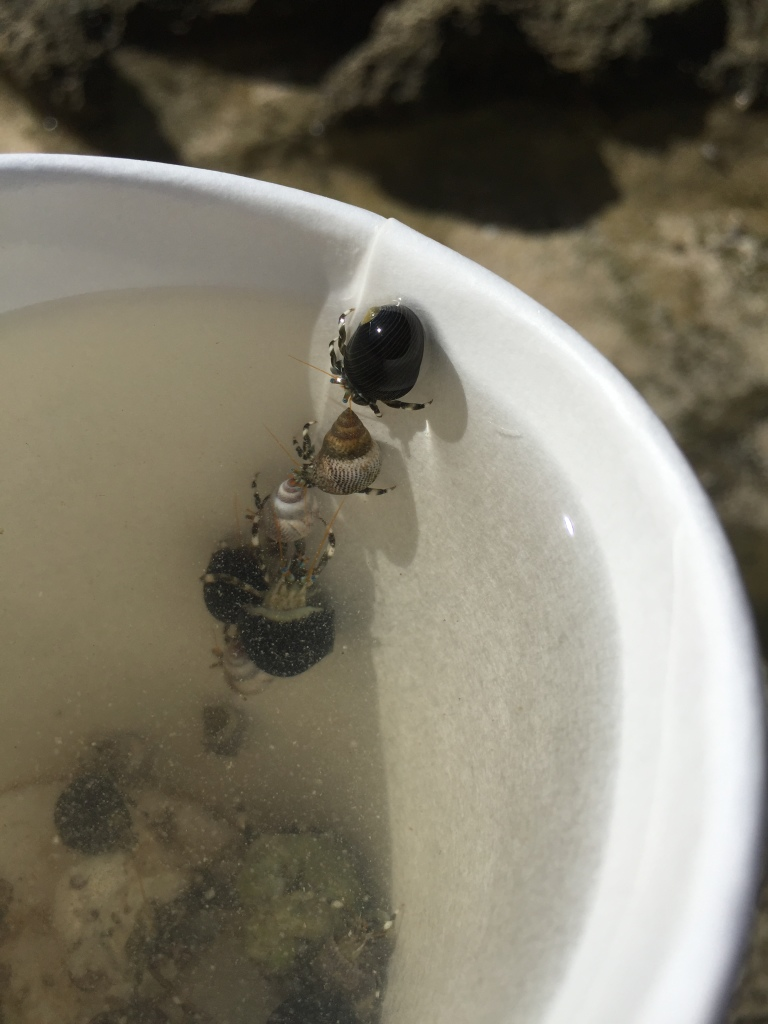 line of hermit crabs crawling up side of paper cup