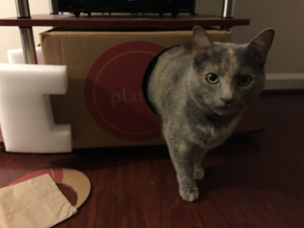 cat half in half out of cardboard box with hole in side