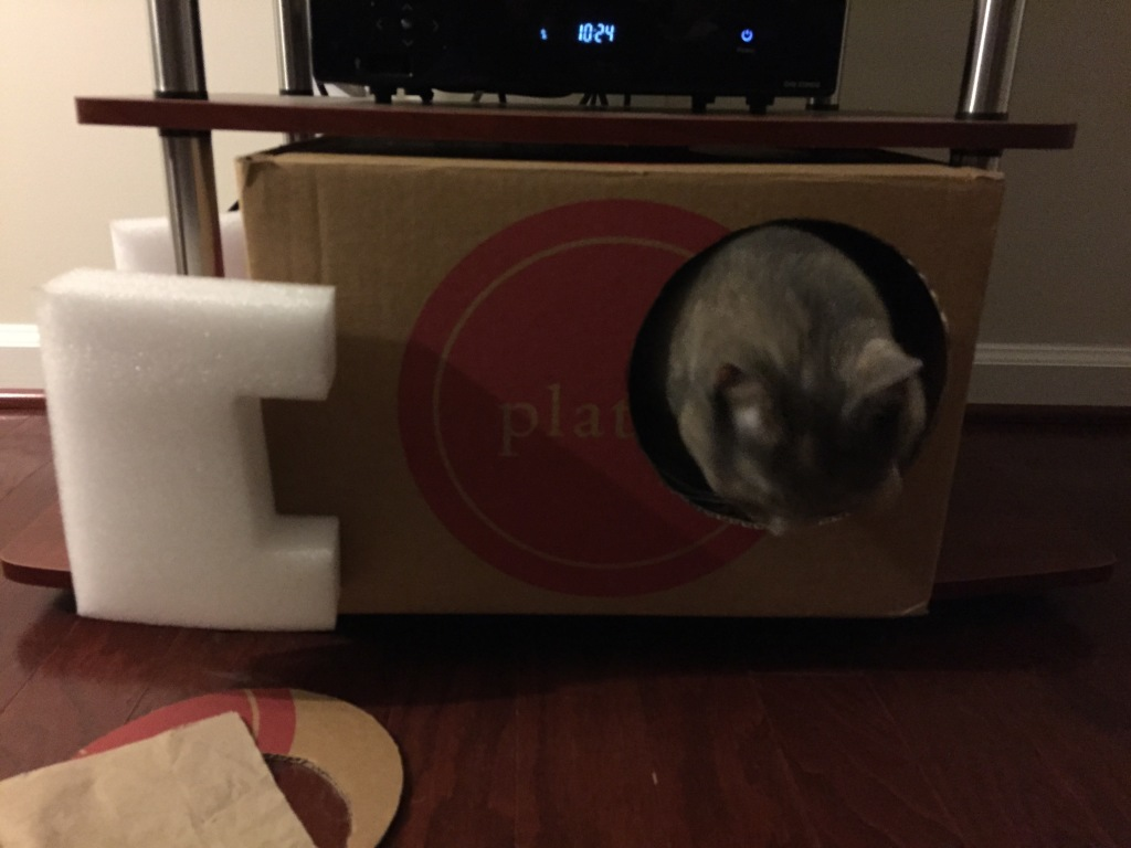 cat head looking down in box hole