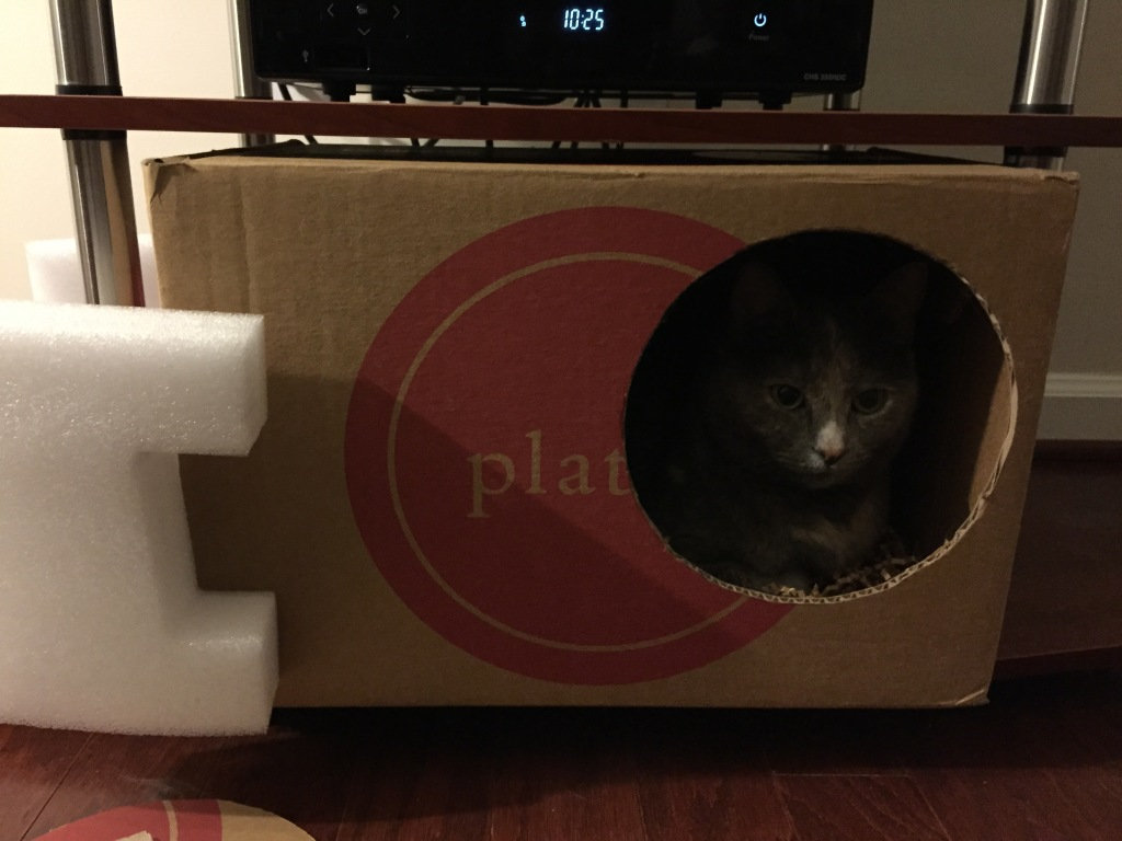 cat sitting in carboard box with face showing in hole cut into side of box