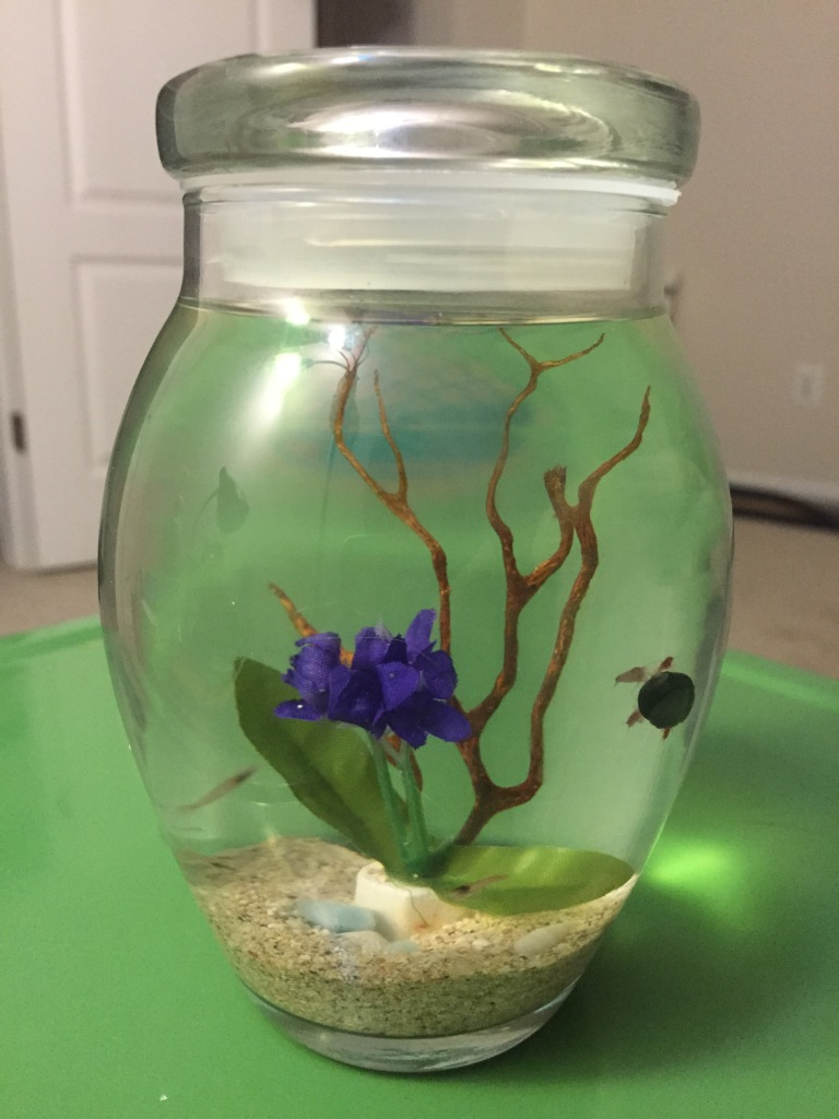 hawaiian red shrimp and snails ecosphere self-sustaining ecosystem