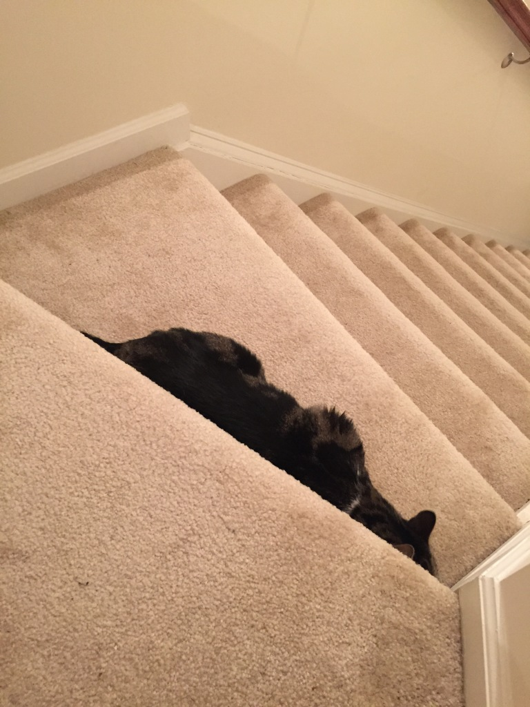 Missy took to the stairs nearby as her hiding spot.