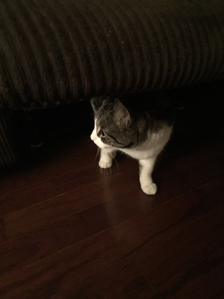 Missy hid under the couch a bit and only emerged with coaxing.