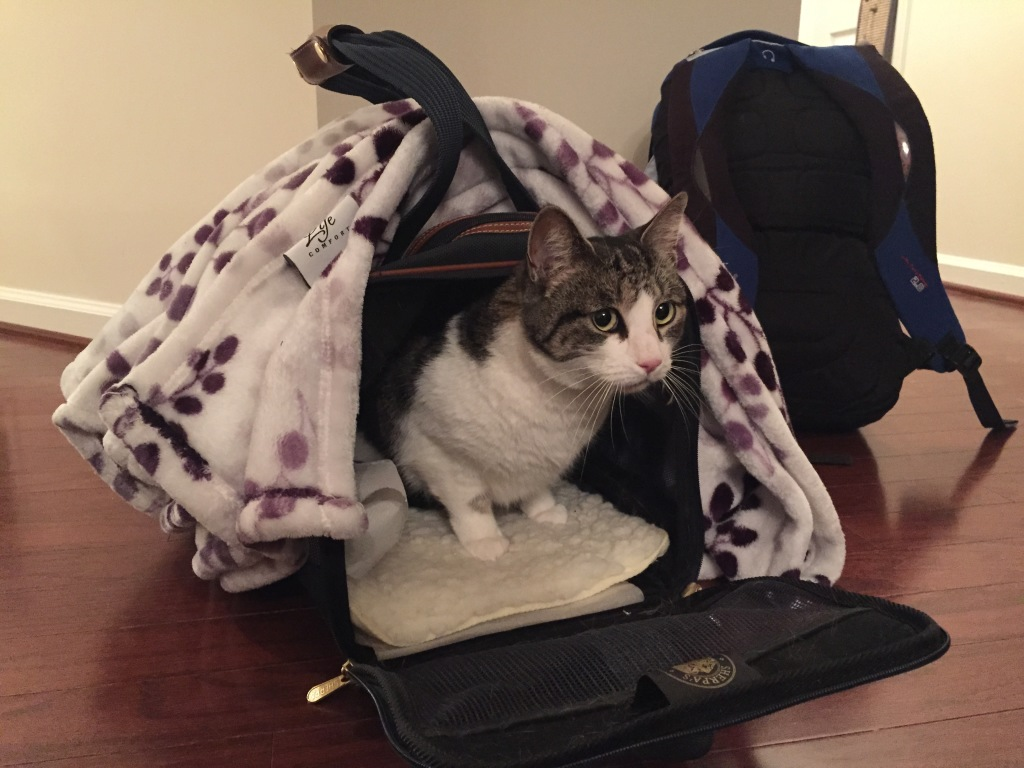 cat exiting carrier after plane ride