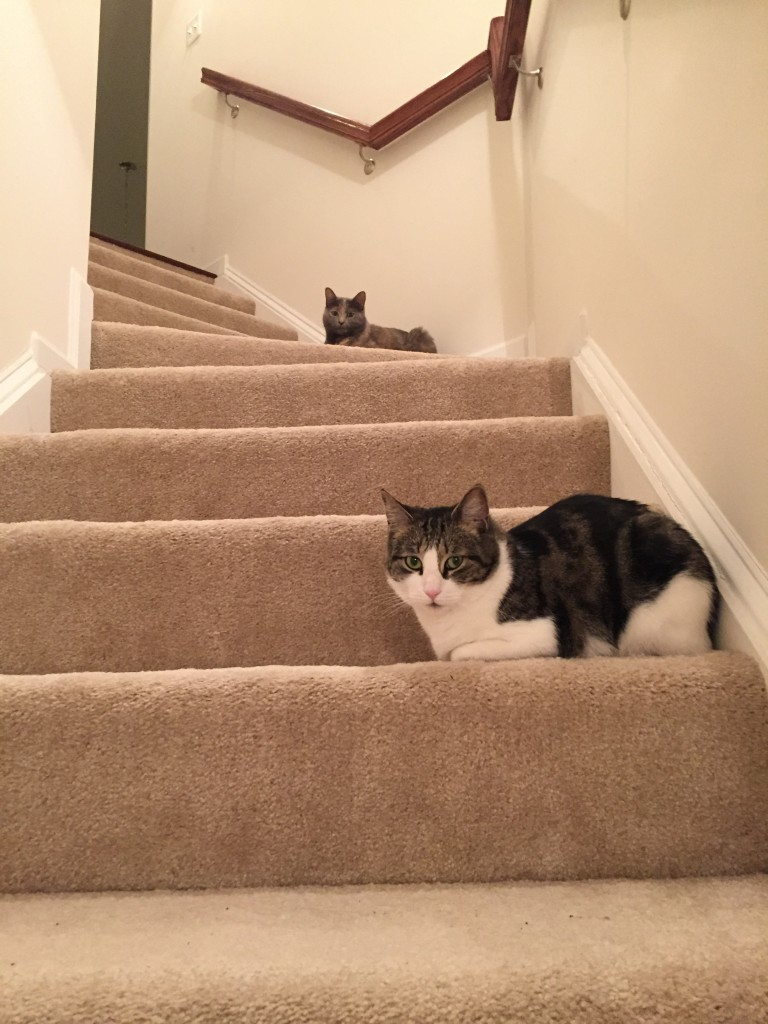 two cats sitting on stairs watching caulking project