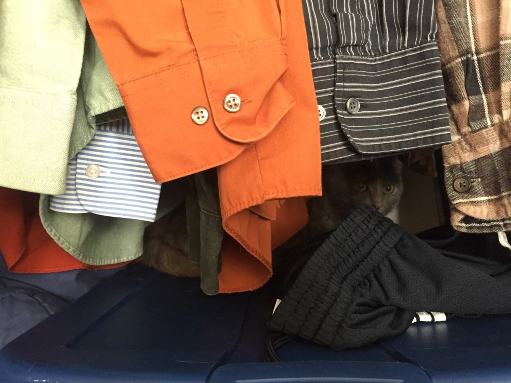 cat hiding in closet by hanging dress shirt sleeves