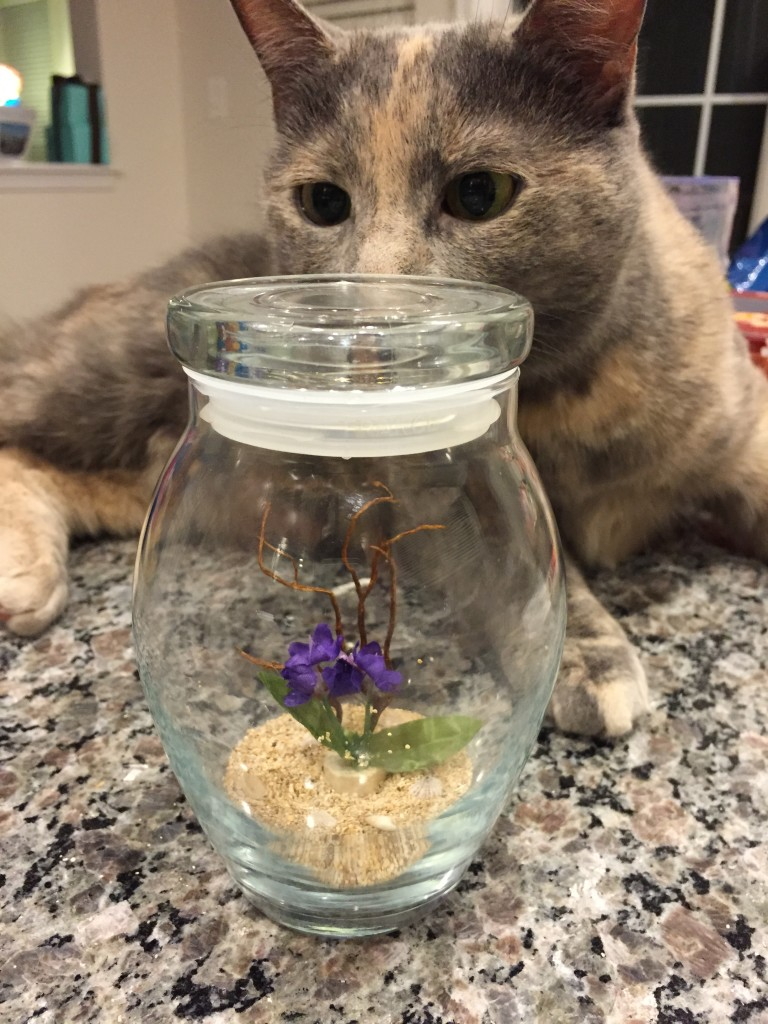 cat sniffing glass jar with sand and fake plant