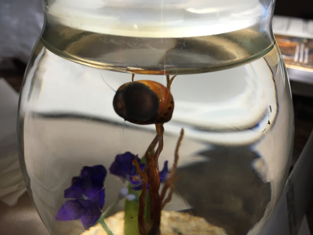 nerite snail eating in glass jar