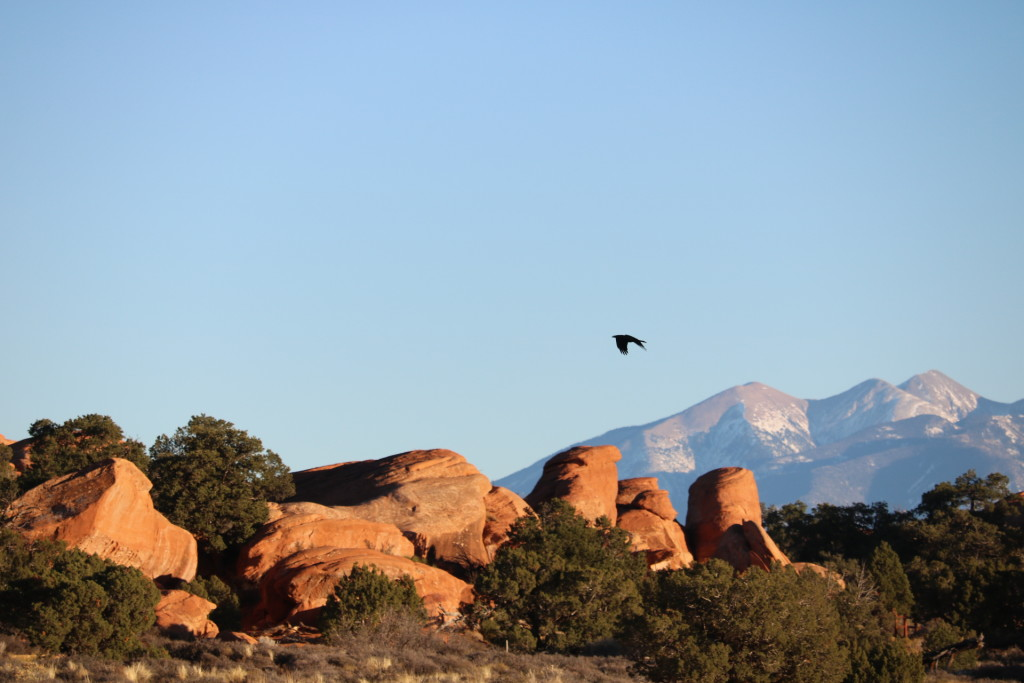 crow flying at arches national park