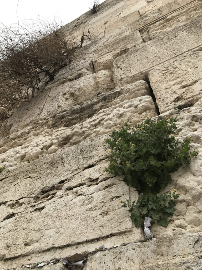 western wall bushes and birds