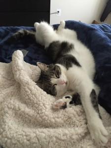 sleeping positions « little fat notebook